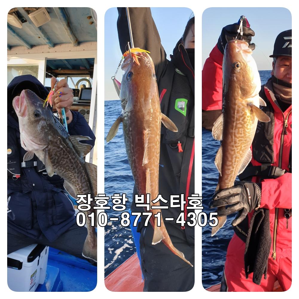 11월29일 장호항 빅스타호 왕대구 대박조황